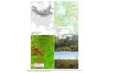 TA funded fieldwork resulted in paper on Siberian wildfires